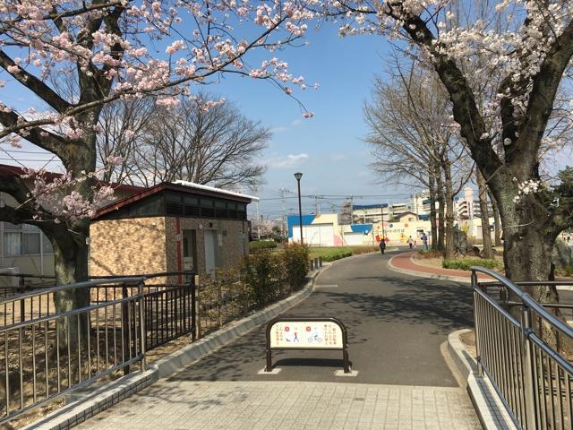 桜も祝賀ムード