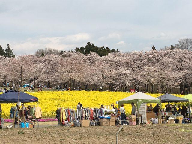 千本桜と菜の花畑