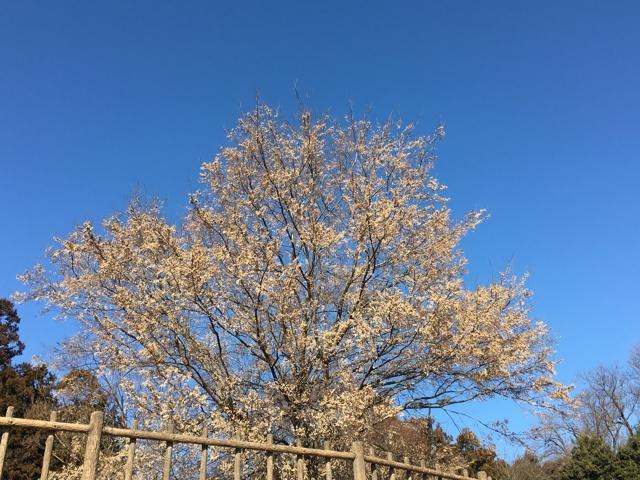 晴天に枯葉の樹木