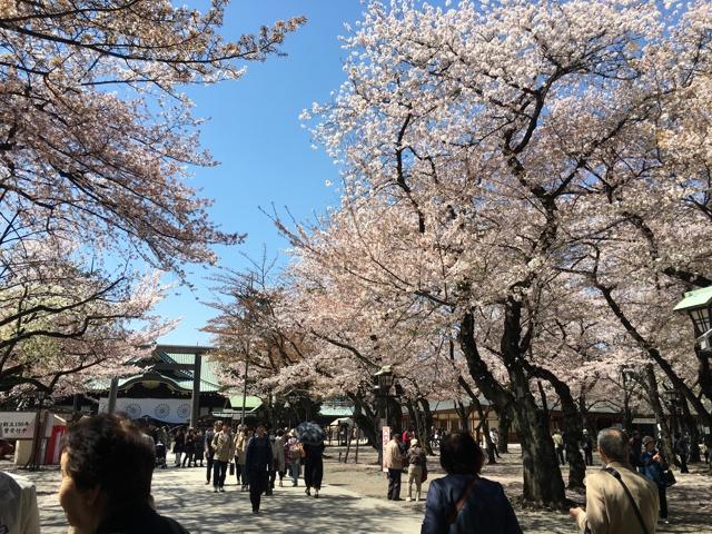 桜満開の靖国神社