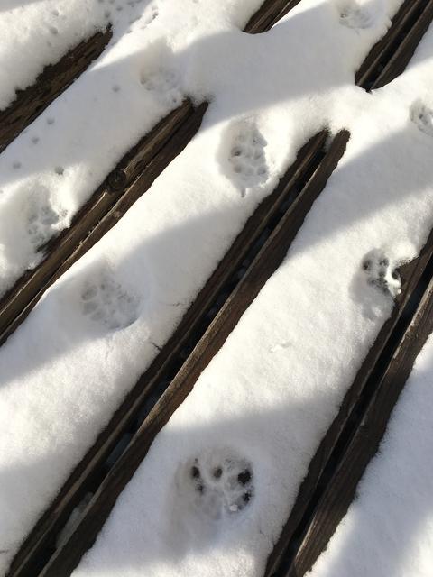 雪に猫の足跡