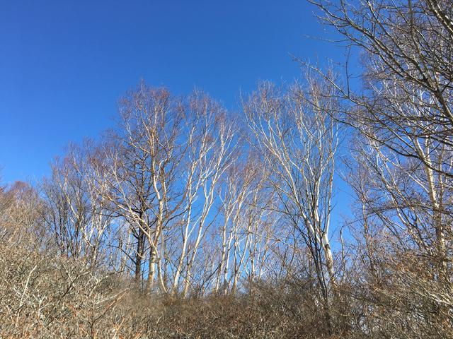 青空に木々