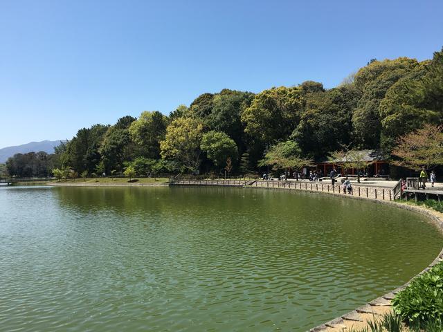 橿原神宮敷地内の池