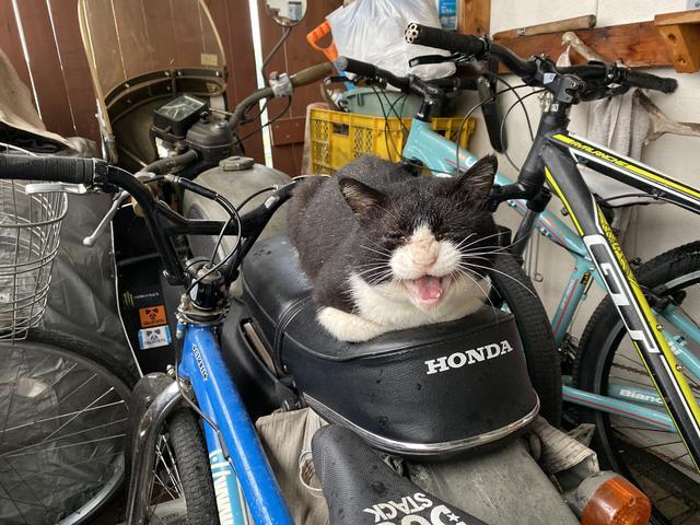 バイクの上に猫
