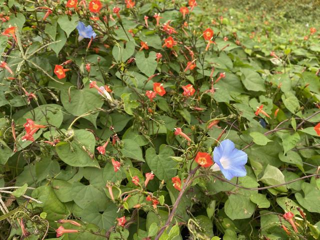 赤と青の花