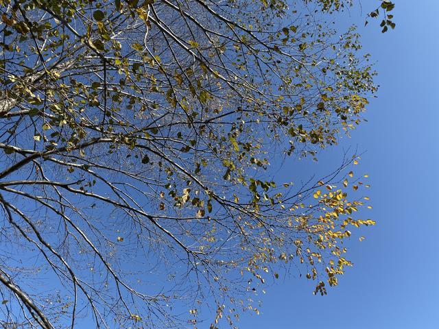 青空に紅葉の黄色