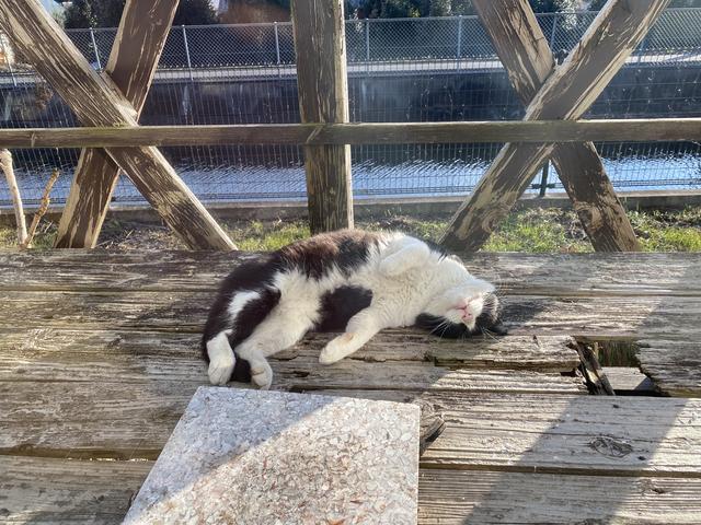 リラックスすぎる野良猫