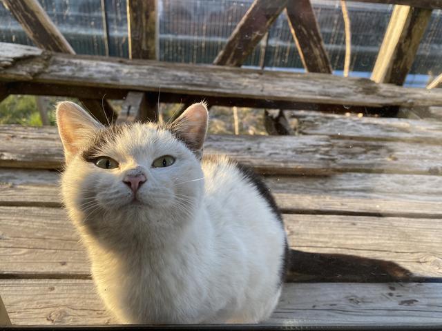 近所の野良猫