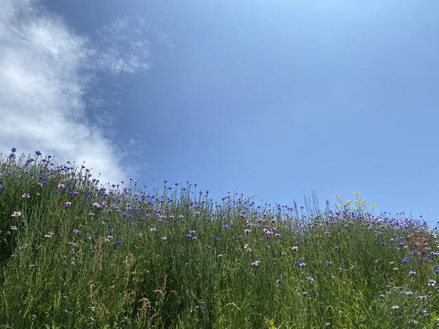 野花と青空