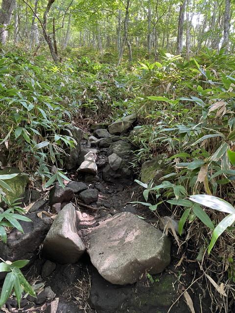 ゴツゴツ岩の急登