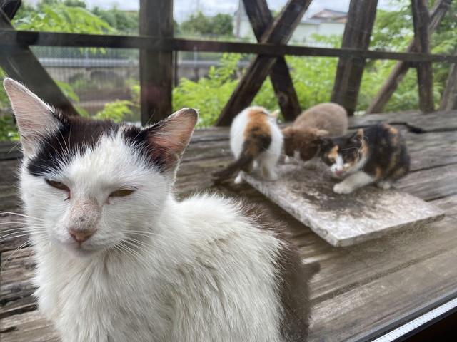 ノラ猫と子猫